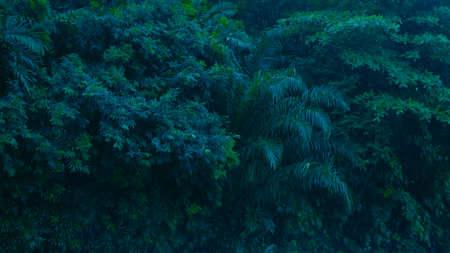 Green leaves bush tropical rain forest concept