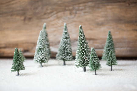 christmas day: Christmas card - a miniature Christmas tree forest in the snow - winter