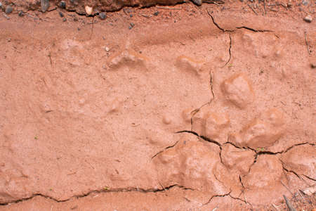 Shiny, dried mud texture looks like chocolate Stock Photo - 15056046