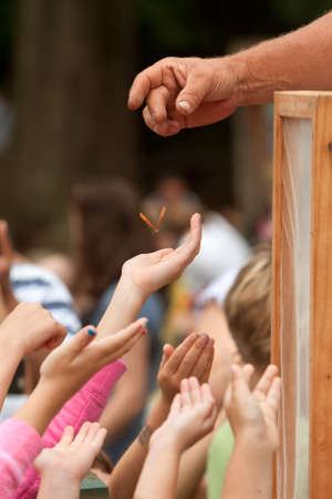 Roswell, GA, USA - July 13, 2013:  Children's hands reach for a butterfly being dropped by a volunteer, as the butterflies are released at the Chattahoochee Nature Center's Butterfly Festival.