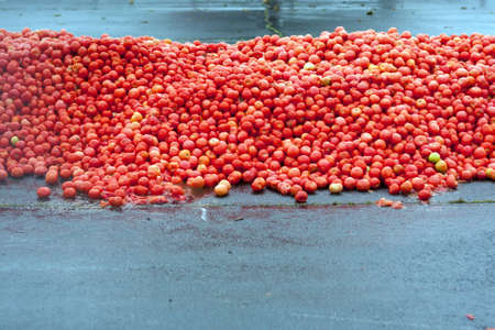 food fight: Huge Pile of Tomatos Sits Piled High For Massive Tomato Food Fight At Event