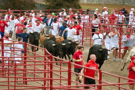 adrenaline rush: Conyers, GA, USA - October 19, 2013:  Hundreds of people run with the bulls at the Great Bull Run at the Georgia International Horse Park.  The event was based on the running of the bulls in Pamplona, Spain.  Editorial