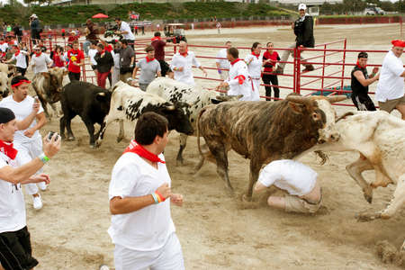 adrenaline rush: Conyers, GA, USA - October 19, 2013:  A man crumples and gets trampled while running with the bulls at The Great Bull Run at the Georgia International Horse Park.  The man walked away with minor injuries. Editorial