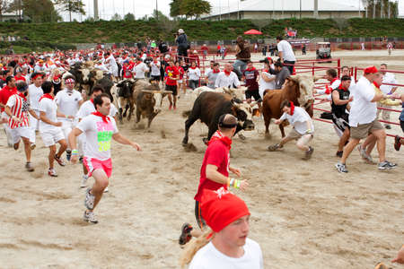 trampled: Conyers, GA, USA - October 19, 2013:  A man falls and gets trampled while running with the bulls at The Great Bull Run at the Georgia International Horse Park.  The man walked away with minor injuries.