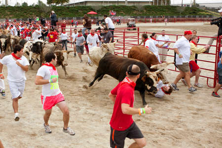 adrenaline rush: Conyers, GA, USA - October 19, 2013:  A man falls between two steers and gets trampled while running with the bulls at The Great Bull Run at the Georgia International Horse Park.  The man walked away with minor injuries.