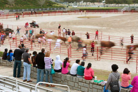 adrenaline rush: Conyers, GA, USA - October 19, 2013:  Static spectators watch as people run with the bulls, motion blurred, in The Great Bull Run at the Georgia International Horse Park.
