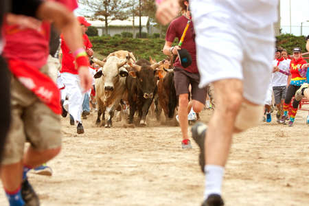 trampled: Conyers, GA, USA - October 19, 2013:  Several people run alongside stampeding bulls at The Great Bull Run at the Georgia International Horse Park. Editorial