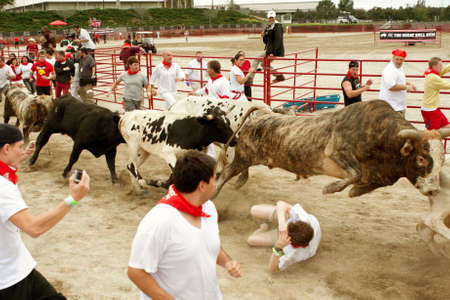 Conyers, GA, USA - October 19, 2013:  A bull leaps over a man lying on the ground, in the running of the bulls at The Great Bull Run at the Georgia International Horse Park.  The man walked away with minor injuries. 新聞圖片