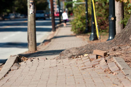 eyesore: A massive tree root pushes through the bricks of a sidewalk in an urban area
