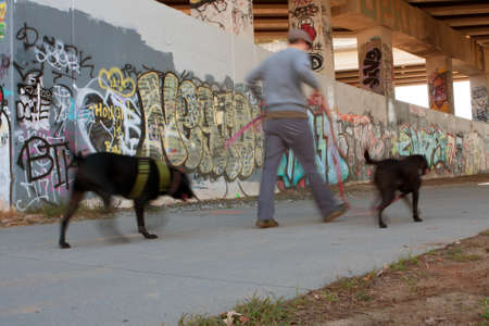 Atlanta, GA, EE.UU. - 02 de noviembre 2013: El desenfoque de movimiento del hombre caminar dos perros a lo largo de un paso elevado cubierto de graffiti que forma parte de las 22 millas Atlanta Beltline. Este proyecto de renovación urbana eventualmente conectará 45 barrios intown Atlanta. Foto de archivo - 25055419