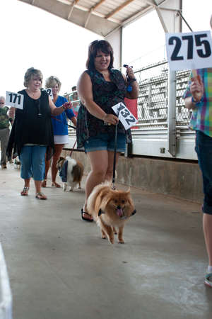 McDonough, GA, USA - May 10, 2014:  Contestants parade their dogs to be voted on at the annual Dog Days of McDonough festival.