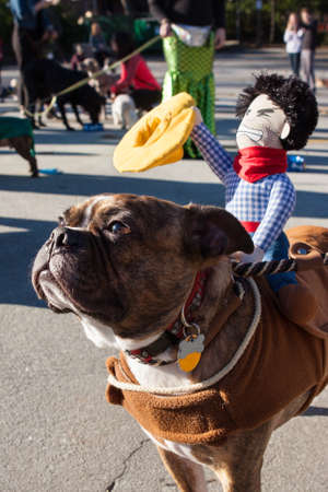 dog in costume: Atlanta, GA, USA - December 5, 2015:  A dog wears a cowboy doll on its back after participating in a dog costume parade on December 5, 2015 in Atlanta, GA.
