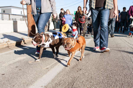 grassroots: Atlanta, GA, USA - December 5, 2015:  Dogs wearing costumes walk in a dog costume parade on December 5, 2015 in Atlanta, GA.