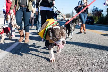 dog in costume: Atlanta, GA, USA - December 5, 2015:  A dog wearing a hamburger costume walks in a dog costume parade on December 5, 2015 in Atlanta, GA.