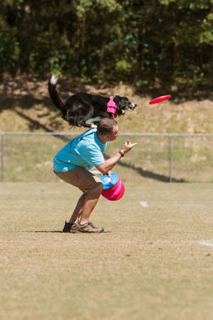 tosses: Snellville, GA, USA - May 14, 2016:  A man tosses a frisbee in the air and dog balancing on mans shoulders prepares to jump to catch frisbee in midair, at Pawfest, a dog festival on May 14, 2016 in Snellville, GA. Editorial