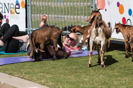 Suwanee, GA, USA - April 29, 2018:  Goats gather around a woman stretching in a free goat yoga class at Suwanee Towne Park on April 29, 2018 in Suwanee, GA. Editorial