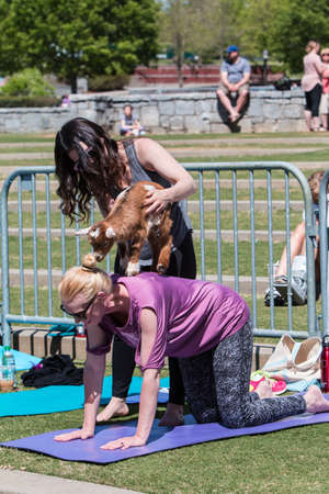 Suwanee, GA, USA - April 29, 2018:  A woman places a baby goat on the back of a kneeling woman as part of a goat yoga class in a public park on April 29, 2018 in Suwanee, GA.
