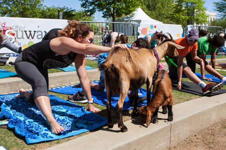 Suwanee, GA, USA - April 29, 2018:  A woman pets a goat while stretching at a goat yoga class in a public park on April 29, 2018 in Suwanee, GA. Stock Photo - 117652660