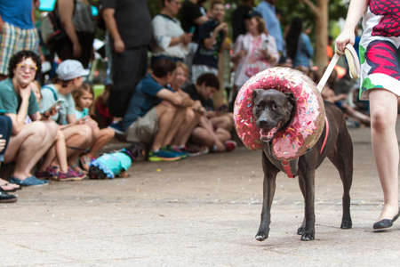 Atlanta, GA, USA - August 18, 2018:  A dog wearing a doughnut costume around his head walks in front of a crowd of spectators at Doggy Con, a dog costume contest in Woodruff Park on August 18, 2018 in Atlanta, GA.
