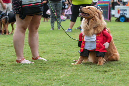 Atlanta, GA, USA - August 18, 2018:  A dog dressed in a pirate costume sits on the grass at the conclusion of  Doggy Con, a dog costume contest in Woodruff Park on August 18, 2018 in Atlanta, GA. Editorial
