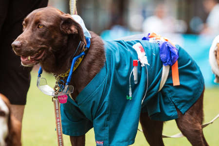 Atlanta, GA, USA - August 18, 2018:  A dog wears medical scrubs and other equipment as part of a lab technician costume at Doggy Con, a dog costume contest in Woodruff Park on August 18, 2018 in Atlanta, GA. Editorial
