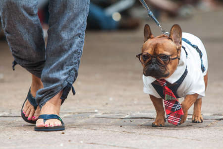 Atlanta, GA, USA - August 18, 2018:  A French Bulldog wears a Harry Potter costume, complete with round glasses, as he walks before the judges at Doggy Con, a dog costume contest in Woodruff Park on August 18, 2018 in Atlanta, GA.