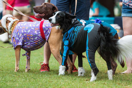 Atlanta, GA, USA - August 18, 2018:  Dogs wear various costumes at Doggy Con, a dog costume contest in Woodruff Park on August 18, 2018 in Atlanta, GA.