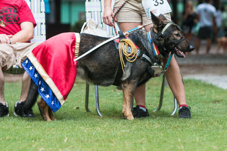 Atlanta, GA, USA - August 18, 2018:  A dog wears a Wonder Woman costume at Doggy Con, a dog costume contest in Woodruff Park on August 18, 2018 in Atlanta, GA.