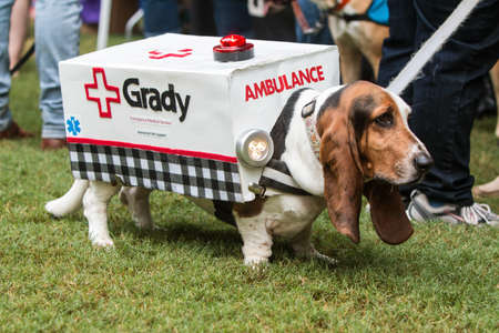 Atlanta, GA, USA - August 18, 2018:  A cute basset hound wears an ambulance costume with flashing lights at Doggy Con, an event where dogs and their owners wear costumes and are judged for prizes, on August 18, 2018 in Atlanta, GA.