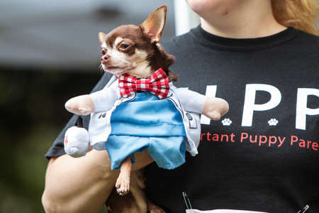 Atlanta, GA, USA - August 18, 2018:  A woman carries a small dog dressed in a doctor costume with a bowtie, as she walks before the judges at Doggy Con, a dog costume contest in Woodruff Park on August 18, 2018 in Atlanta, GA.