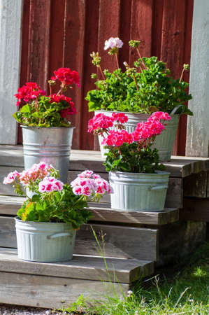 Flowers standing on steps to a red house Stock Photo