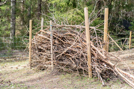 windbreak made of lots of old sticks Stock Photo
