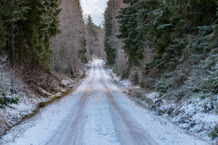 a straight road through a swedish forest in december Stok Fotoğraf
