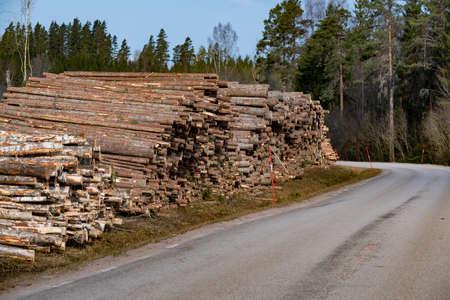 pile of pulpwood trunks near a road