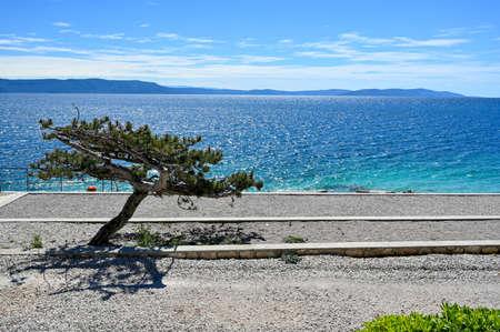 small tree making shadow on pebble beach Stock Photo