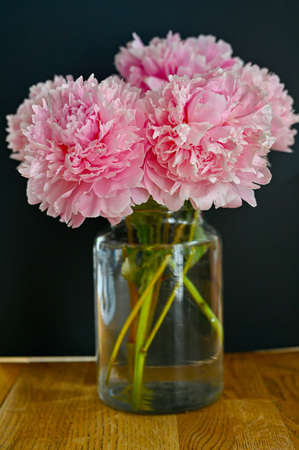 big pink peony blossoms indoors in a kitchen Standard-Bild