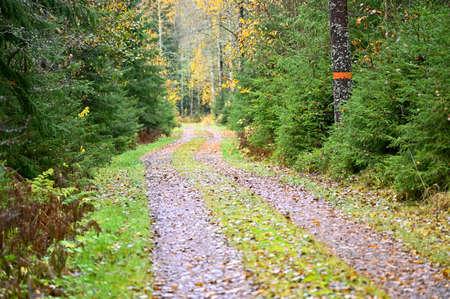 trail through forest in Sweden marked in orange