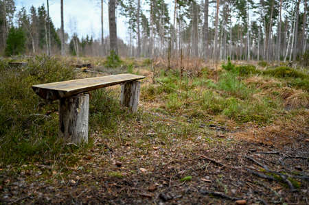 bench near path in swedish forest in Kumla Sweden february 2020