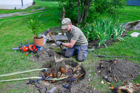 man working har in garden with roots and stump Фото со стока