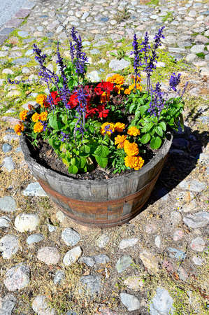 colorful flowers in a wooden flowerpot standing on pavement