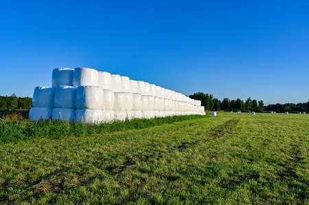 silage bales on a green field in Sweden