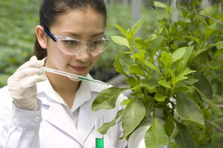 investigando: Los científicos que hacen investigación en la granja moderna LANG_EVOIMAGES