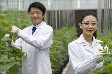 investigando: Scientists doing research in modern farm
