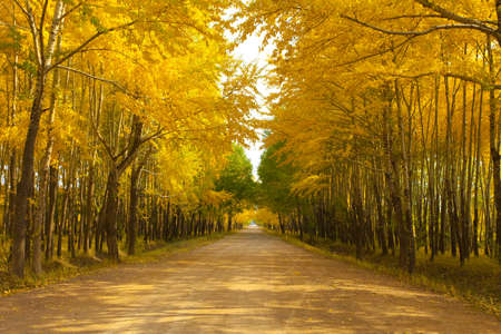 Road lined with trees in autumn LANG_EVOIMAGES