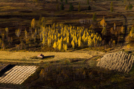 Field in autumn,China