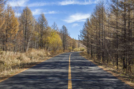Road going through forest in Inner Mongolia province, China