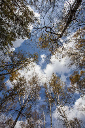 Low angle view of trees in Inner Mongolia province,China LANG_EVOIMAGES