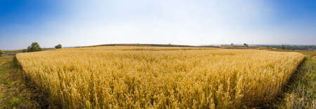 hebei province: Gold field in Hebei province, China