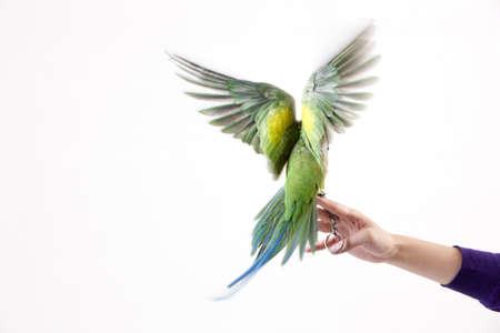 Close-up of a pet parrot