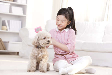 Little girl playing with a pet toy poodle LANG_EVOIMAGES